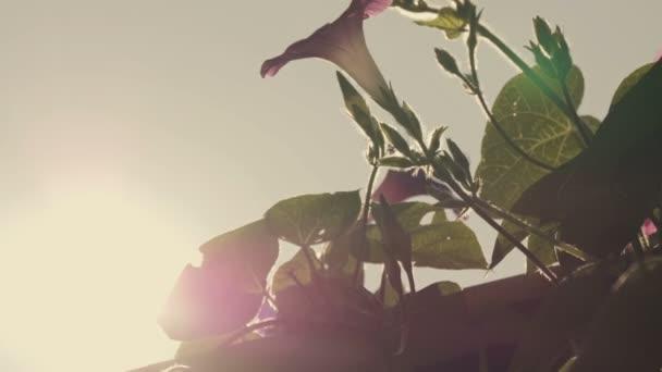 Virágok virágzó körte Vértes hátország Kötet napfény és romantikus haze