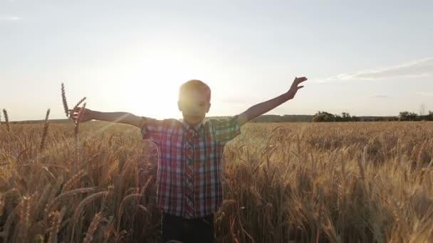 chlapce vede přes pole pšenice při západu slunce