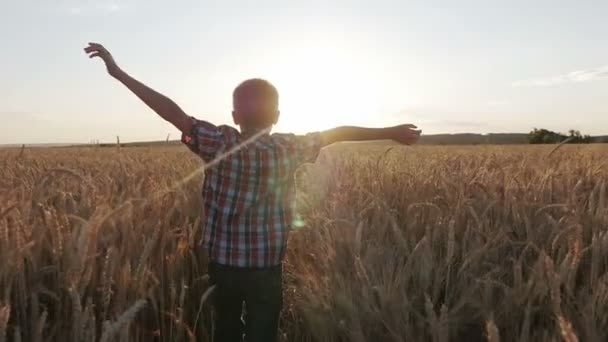boy runs through a wheat field at sunset