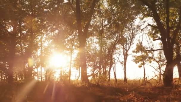 Autumn deciduous forest at dawn or sunrise