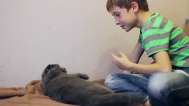 boy  playing with a gray British cat