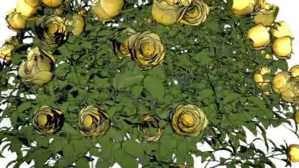 Žluté růže 0005p