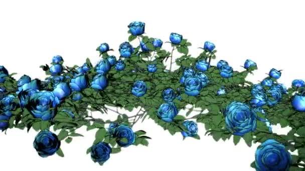 Blue roses 0006P