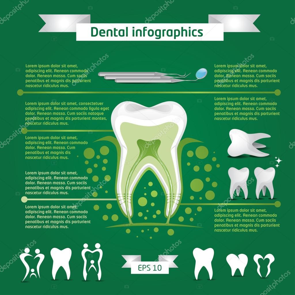 Anatomía del diente de infografía — Vector de stock © artemon91 ...