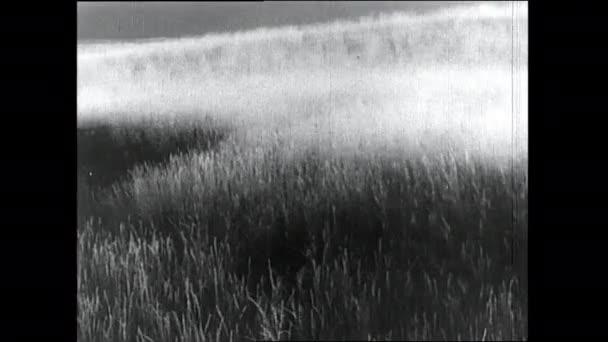 1930s: Rolling fields of grain.