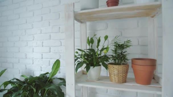 Botanické složení domácí vnitřní zahrady. Zelené rostliny v květináčích, dřevěné police a bílá stěna