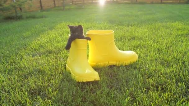 Roztomilé kotě ve žluté botě na trávníku