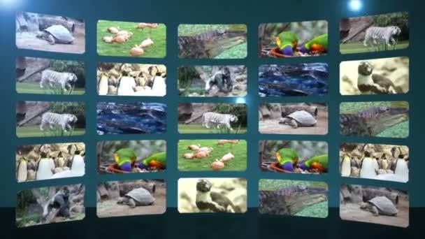 Collage di Zoo con tigre
