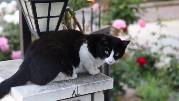 krásná malá kočka hledí