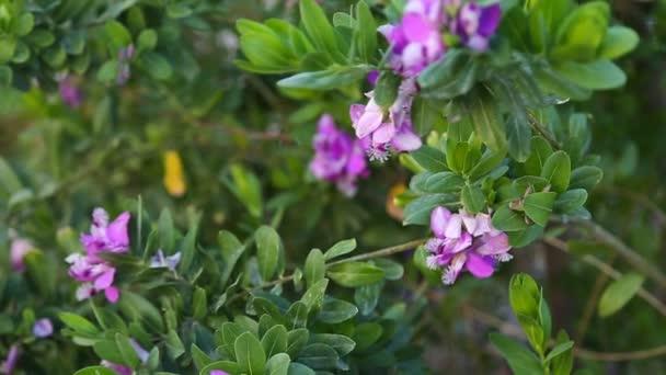 malé fialové květy