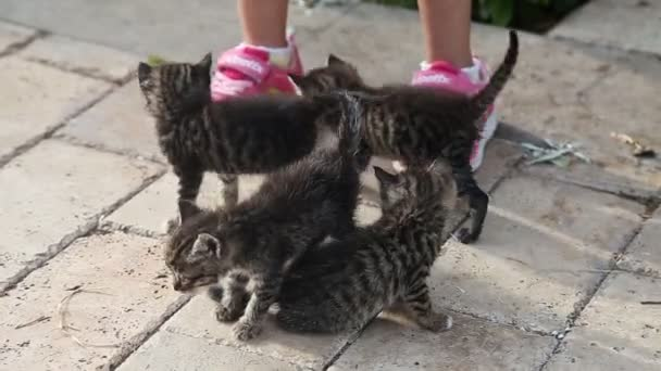 Cute gray kittens with little girl