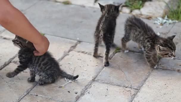 A kislány aranyos szürke cica