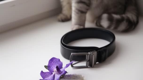 angol macska visel egy csokornyakkendő