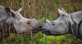 Photo Portrait of Indian rhinoceroses