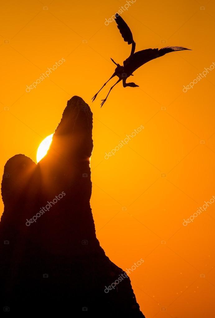 Heron takes off at sunset