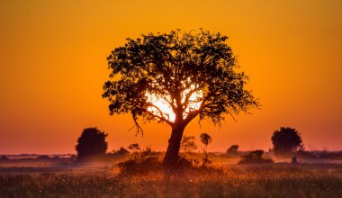 Colorful sunset in african savanna