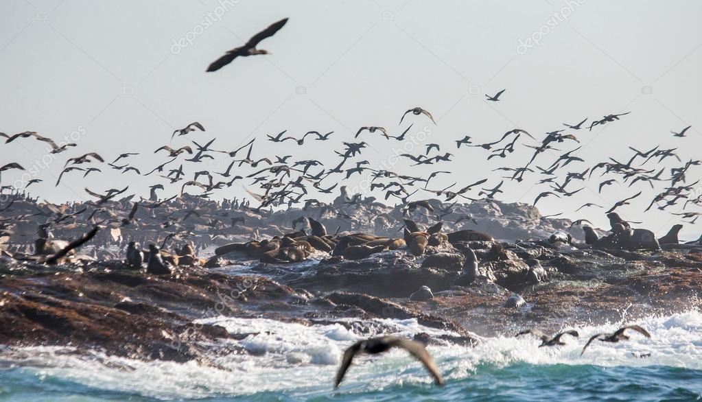 Colony of fur seals on rocky seashore