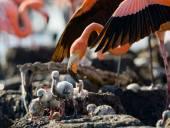 Fotografia I fenicotteri rosa dei Caraibi