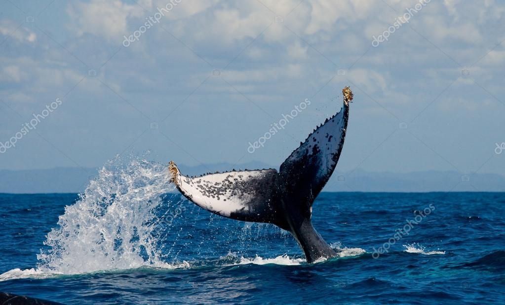 whaling #hashtag