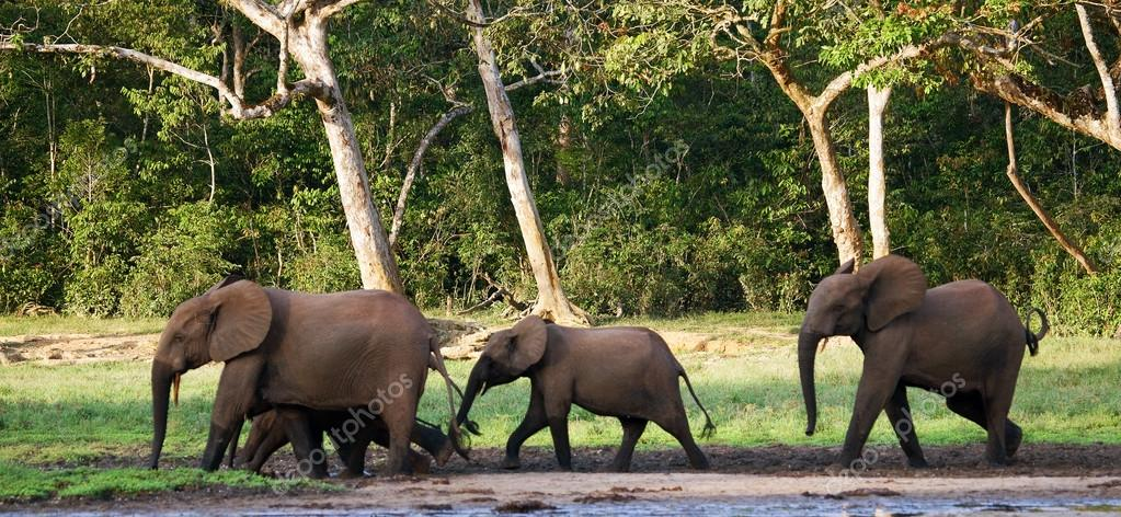 Herd of elephants including a calf in a watering hole