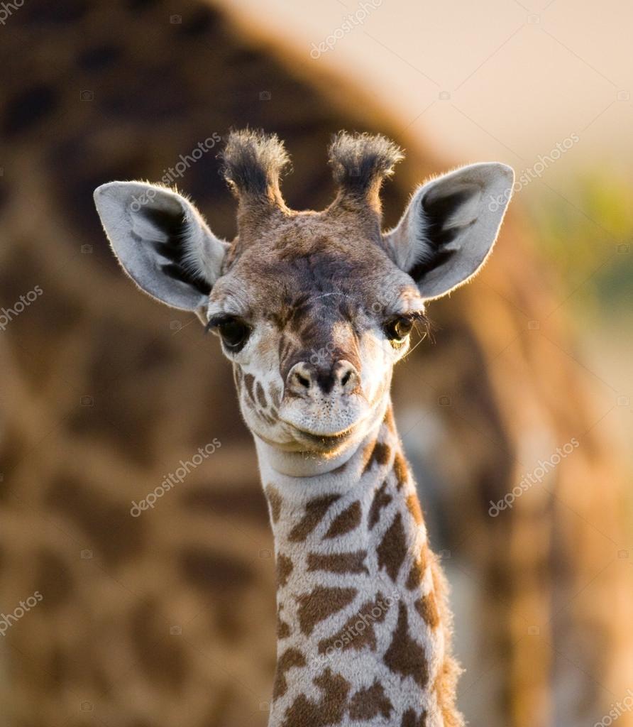 Dziecko ładny żyrafa — zdjęcie stockowe gudkovandrey