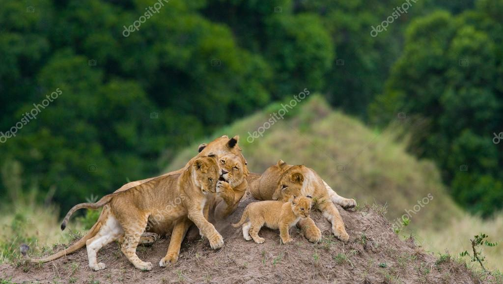 lioness in its habitat with cub