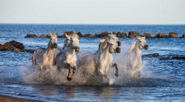 Horses galloping along the sea