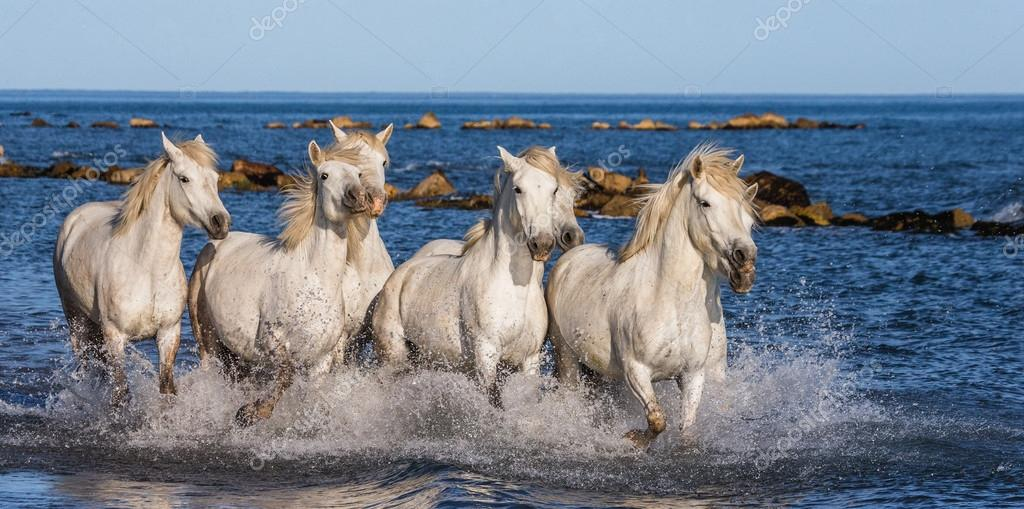Horses galloping along the sea