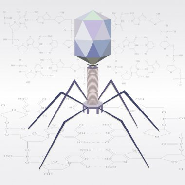 Vector virus bacteriophage model