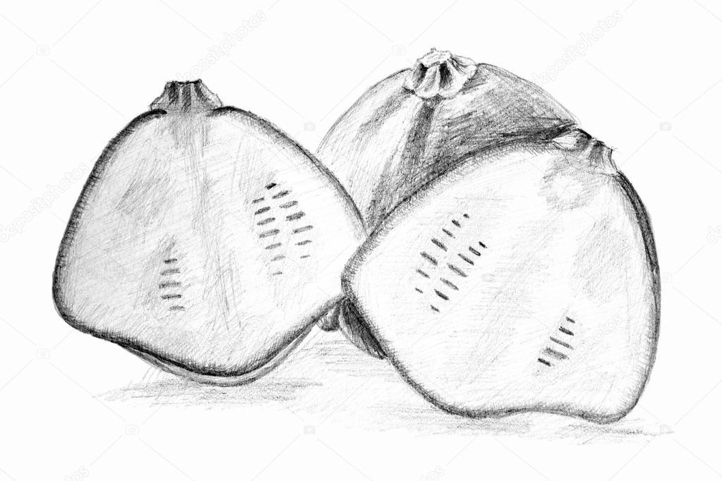 Originale Disegno A Matita Del Cespuglio Zucca O Squash Foto Stock