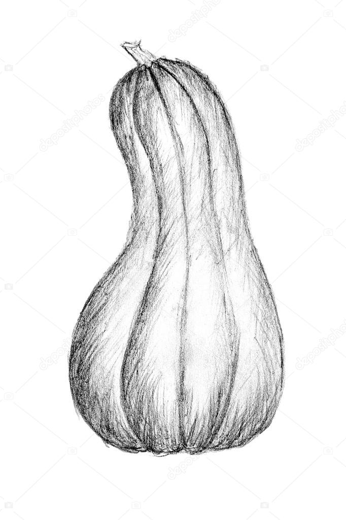 Oorspronkelijke potlood tekenen door de bush pompoen of squash stockfoto kostik2photo 85519536 - Courge dessin ...