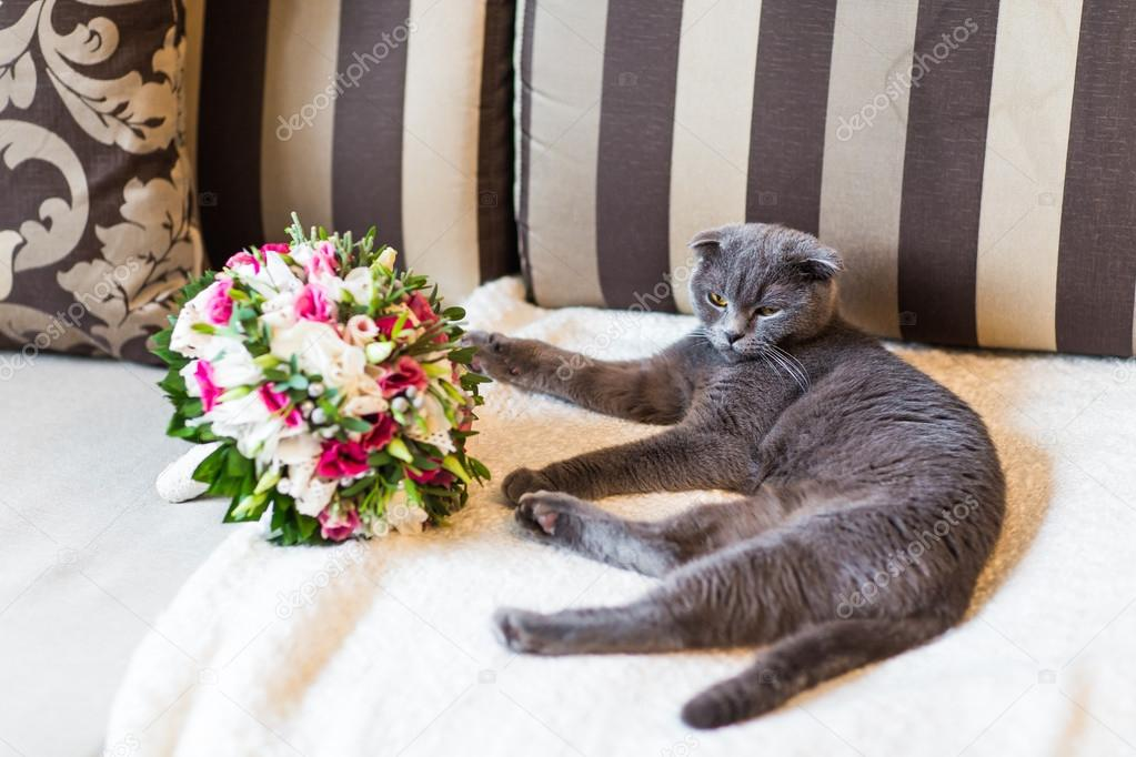 scottish fold cat and wedding bouquet