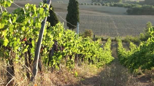 Toskánské vinice v Itálii