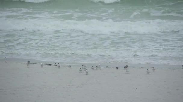 A scene of seabirds on a Florida beach