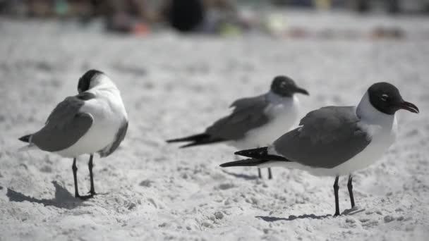 Tengeri madarat fog, a floridai tengerparton egy jelenet