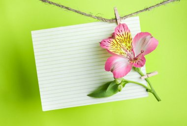 Greeting card with pink Alstroemeria