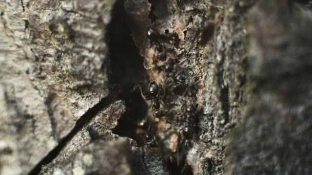 Mravenci na kůře stromů v lese