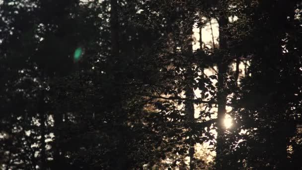 Lesní stromy proti západu slunce