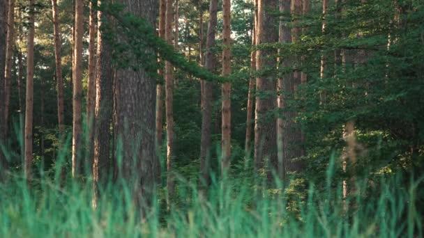 Divoké přírody, lesa