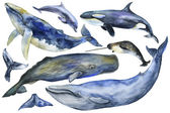 Watercolor Marine Mammals