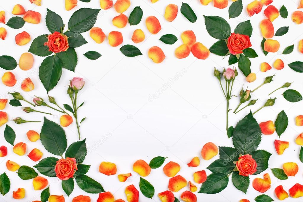 Flowers background, frame with roses