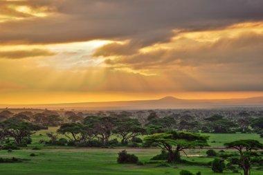 African savannah in Amboseli National Park