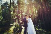 wedding bride in a sunny forest