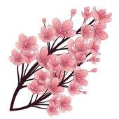Fényképek Cseresznyefa virágzik. Vintage kézzel rajzolt vektoros illusztráció. Elszigetelt elemek