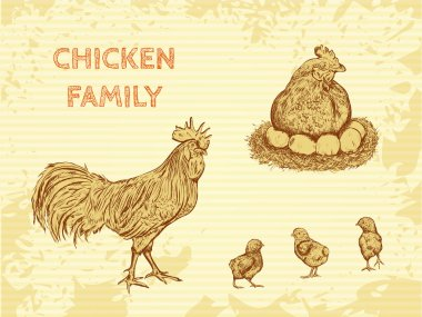 organic farm vintage poster with family chicken: cock, hen with chickens. Hand drawn retro vector illustration in sketch style