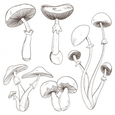 Set with a variety of vintage mushrooms. Retro hand drawn vector illustration