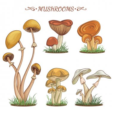 Set with a variety of vintage colorful realistic mushrooms. Retro hand drawn vector illustration
