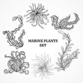 Photo Collection of marine plants, leaves and seaweed. Vintage set of black and white hand drawn marine flora. Isolated vector illustration in line art style.Design for summer beach, decorations.