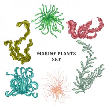 Collection of marine plants, leaves and seaweed. Vintage set of colorful hand drawn marine flora. Isolated vector illustration.Design for summer beach, decorations.