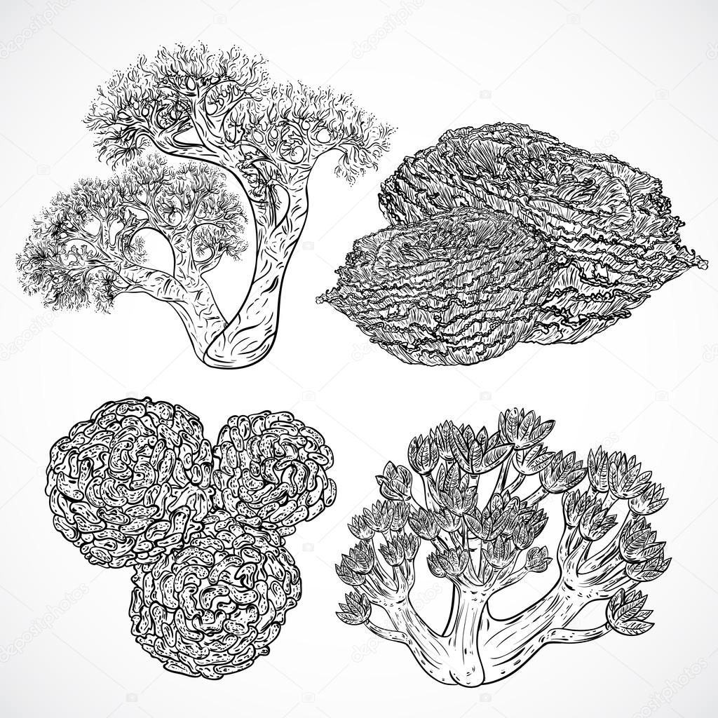Collection Of Marine Plants And Corals Vintage Set Of Black And